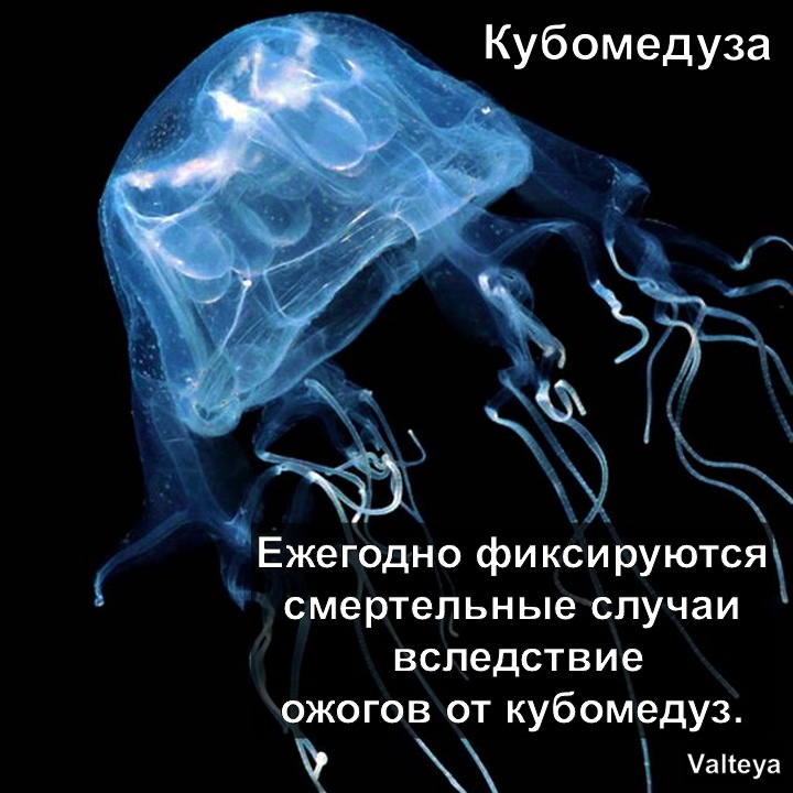 Хештег valtey на   Салон Магии и Мистики Елены Руденко. Киев ,тел: +380506251562 NBbXeo3CbDs