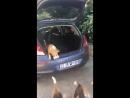 Полный багажник собак