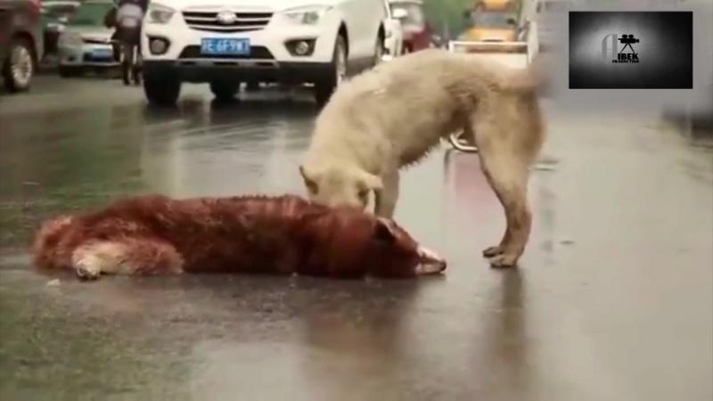 Собаки тоже плачут...Берегите животных ведь они тоже дышат и живут.mp4