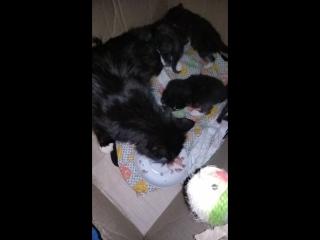 кошка Сучка ест ( так ее назвала Зуля, продавщица кормившая ее)