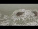 ШОК ! Живую русалку засняли на камеру