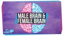 Are There Male and Female Brains?