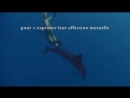 Dolphin-danceorg presents_ Together_Dancing with Spinner Dolphins Trailer en Français.mp4