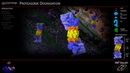 Proteasome Animation 3D Molecular Biology