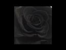 Чёрная королевская роза 🖤😍