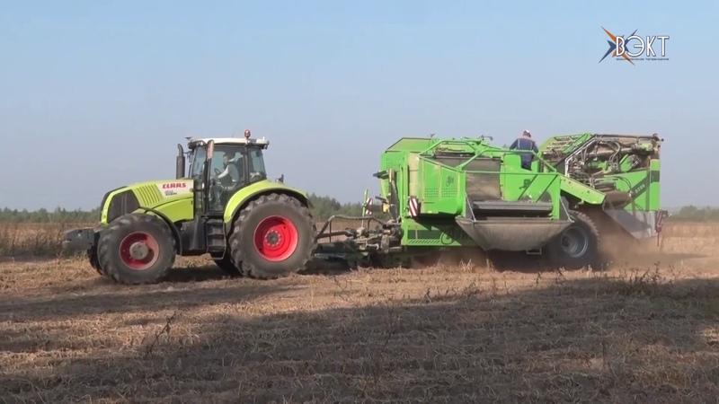 Горячая пора для аграриев. Ударными темпами ведут уборку картофеля воскресенские хлеборобы