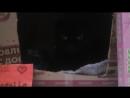 Истории от кошки багиры