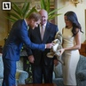 Life Новости on Instagram Настоящая милота по австралийски принцу Гарри и его жене Меган Маркл во время визита на зелёный материк преподнесли