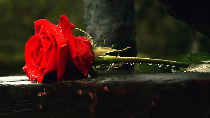 Pequeña flor. José Guardiola