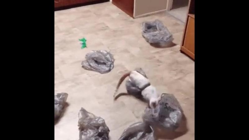 муркостан пакеты