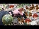 Коп 2017.Поиски грибов (сморчков и строчков).