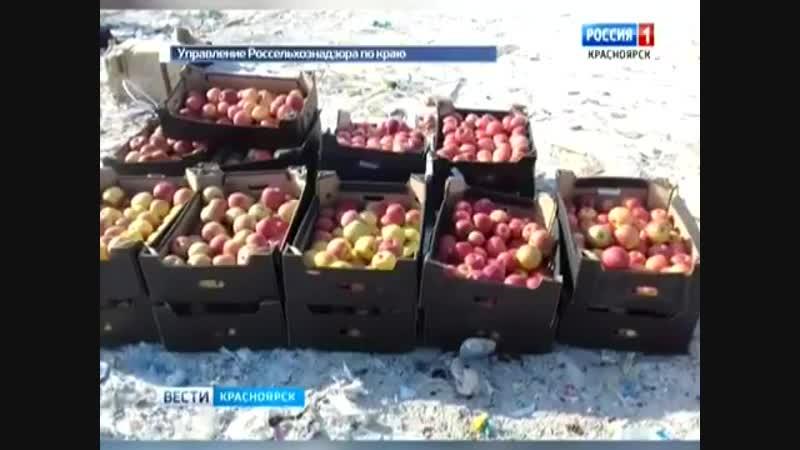 Тонну санкционных яблок отправили под бульдозер в Красноярске