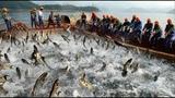 Рыбалка, всем разрешено ловить рыбу! Amazing Big Fishing Catching Skill, People Catching Fish By Using The Net And Vessel On The Sea