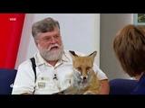 Der mit dem Fuchs schmust Lady Foxy Rolf Niggemeyers gro