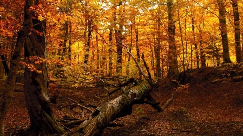 Silent Tales - Elven Woods