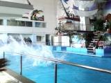 дельфинарий Набережные Челны 1