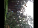Степа на Вихре