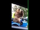 фак от Медведя