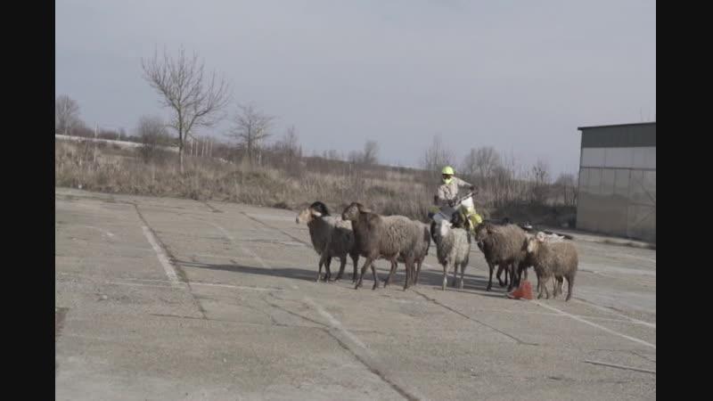 Мото пастух Непрошенные гости