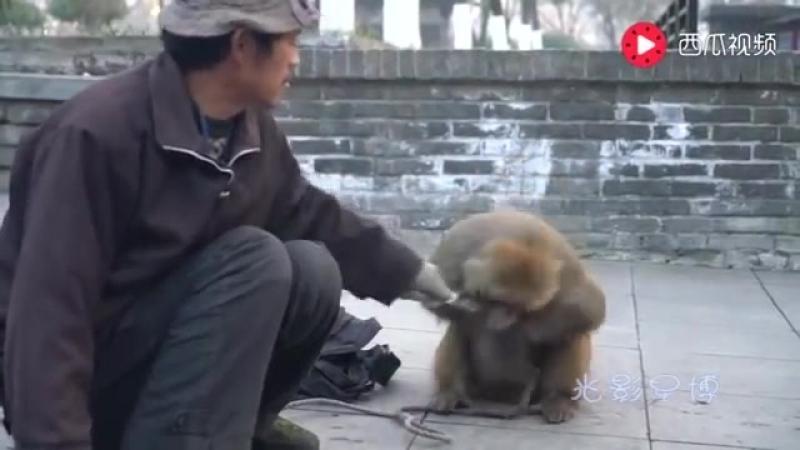 耍猴現場 猴子拿刀反擊耍猴人 有本事你別躲[via torchbrowser.com]