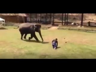 Слон бросился на помощь охраннику, которого бил хулиган
