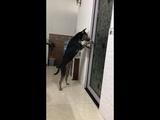 Dog Opens the Door ViralHog