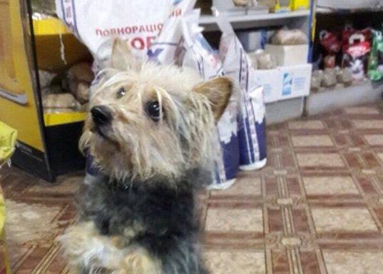 Хозяйка попросила бомжа заколоть собаку палкой с гвоздем за бутылку водки, когда не смогла повесить ее в ванне