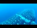 Дайверы спасли кита Кит просил помощи у людей Редкие кадры