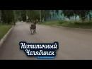 Сбежал олень