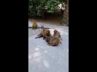 обезьяны на острове обезьян🤗