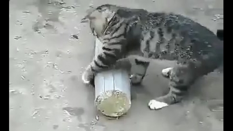 Кошка придушила мышь и играется с мышью Прикол!Юмор! Смех Смешные приколы с кошками