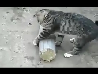 Кошка придушила мышь и играется с мышью!!! Прикол!Юмор! Смех Смешные приколы с кошками