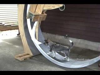 Giant Dog Exercise Wheel with Kibble Dispenser