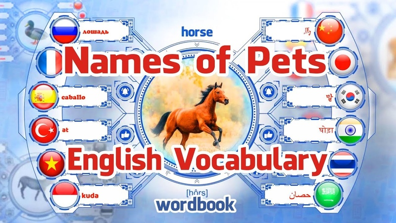 Lesson Names of Pets | Learn English Vocabulary With Pictures | Word Book