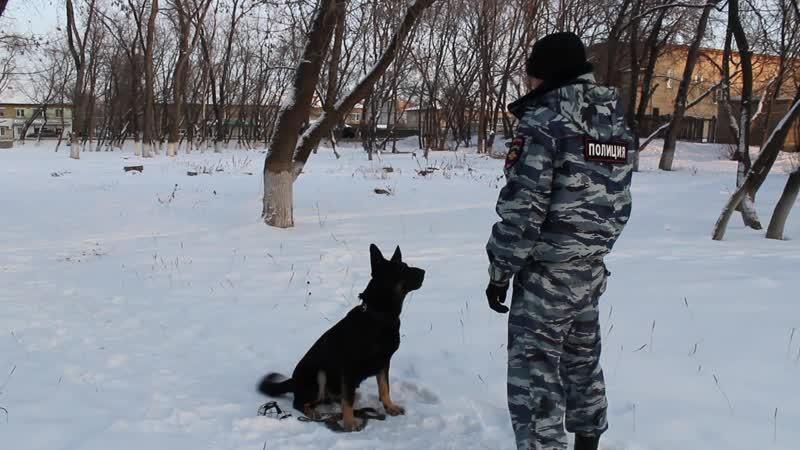 Служебная собака Берта раскрыла кражу на Увильдах