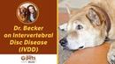 Болезнь межпозвонковых дисков / Intervertebral Disc Disease (IVDD)