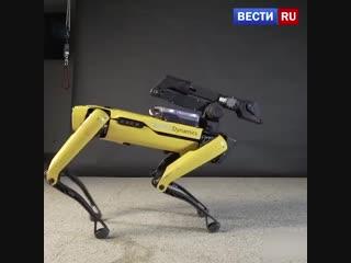 Танцующий робот Spot Mini