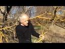 INQUIETANT Les arbres jaunissent et meurent 22 02 19 15h