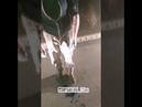 Таксист заставил умыться зелёнкой безденежного пассажира