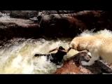 Собакен спасает своего четвероногого друга