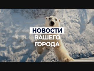 Нашествие медведей на Новую Землю