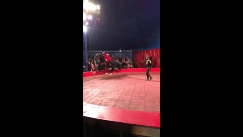 Цирк виват