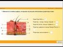Интерактивное задание из учебного пособия Биология человека