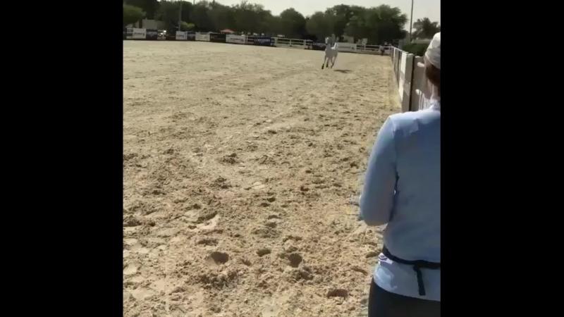 Лошадь прибегает на зов хозяйки