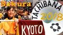京都橘高校吹奏楽部 SAKURA PARADE Kyoto Tachibana S.H.S. Band (Mar'18) 32-Camera Edit FCPX Multicam