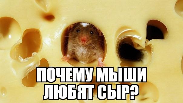 Почему мыши любят сыр