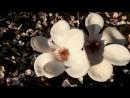 Melodiya_dushi.._VESNA__Mehdi_-_The_First_Day_of_Spring_
