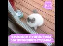 Кот пришел просить помощи у соседей хозяев, которые его бросили
