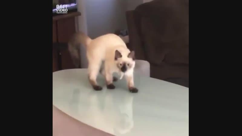 Женские Хитрости (vk.com/womantrlck) - смешные котики