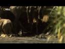 Nat Geo Wild Африка Убийцы с фантазией Смертельная переправа 1080р